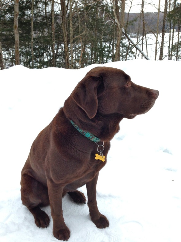 Pet Friendly Travel with Baci